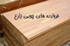 واردات چوب جنگلی راش گرجستان - واردکننده چوب راش  - تهران