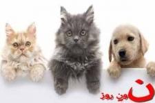 فروش حیوانات