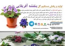 بازاریاب گل و گیاه