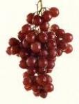 کنسانتره انگور سفید و قرمز