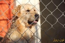 باشگاه پرورش سگ سپن , فروش انواع نژاد های سگ, واردات انواع نژاد های سگ, آموزش تخصصی انواع نژاد سگ