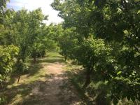 10000 متر باغ در کردزار