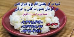 مرکز پخش قارچ کفیر عمده و جزئی در سرتاسر ایران با کیفیت عالی