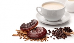 نمایندگی قارچ و قهوه گانودرما