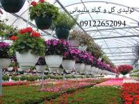 تولیدی گل و گیاه سلیمانی,تولید گل و گیاهان زینتی , تولید گل و گیاه آپارتمانی ,فروش انواع گل و گیاه
