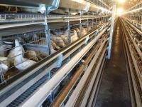 فروش قفس مرغ تخمگذارشرکت زرین توتک