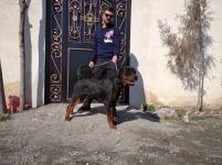 روتوایلر سگ ضد شورش آمریکا