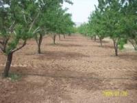 فروش 17 جریب باغ بادام وهلو منطقه سامان