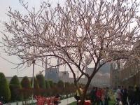 اجاره سوییت اصفهان