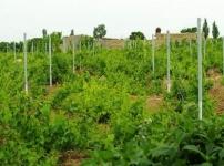 فروش باغ انگور و میوه اکازیون