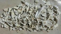 تامین استخوان سوخته خوراک دام وطیور